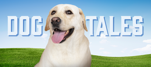 """The words """"Dog Tales"""" and a Labrador Retriever dog against a background of blue sky and grassy hills"""