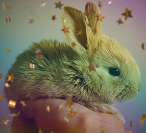 Gold confetti and rainbow colors overlay an image of a hand holding a small bunny