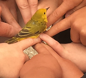 Intermountain Bird Observatory