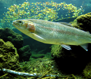 The Whys of the Boise Rivers Fishes